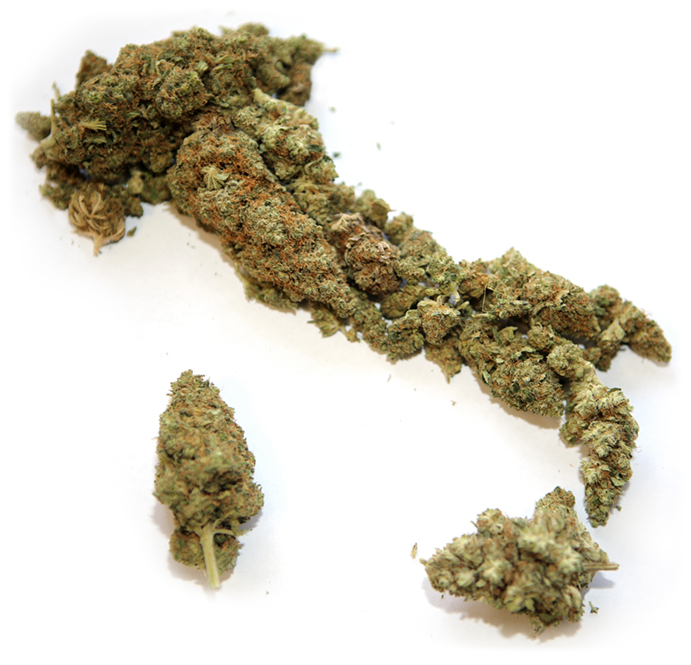 cannabis made in italy